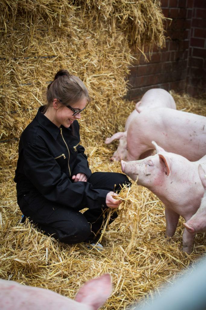 Hof Mörixmann Hilter bei Osnabrück Aktivstall für Schweine