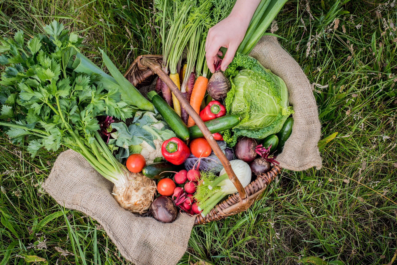Gemüsekochbuch Stefanie Hiekmann